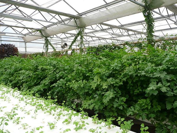 与张家口蔬菜种植大户签订长期供货合同