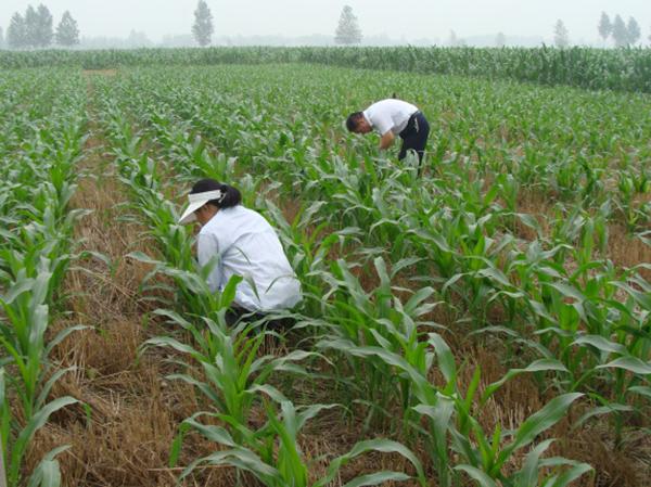 我公司与陕西签订1500吨菌肥合同