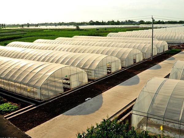 与河南开封蔬菜种植基地签订万达彩票登录供货合同